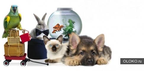 Поиск поставщиков товаров для животных..
