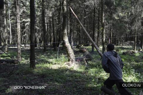 Удаление деревьев.