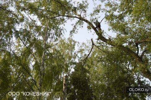Удаление деревьев в Московской области.