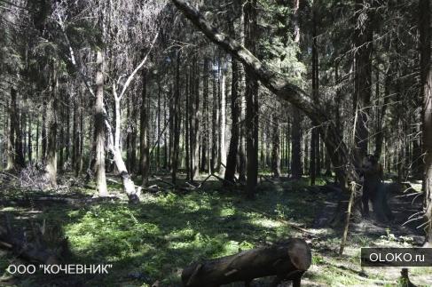 Удаление деревьев, вырубка деревьев по Москве и Московской области.